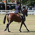 Bay Hack cantering in the ring~ Rylestone-Kandos Show 2010 by MomentsinTime