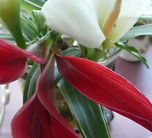 Red Jacobean Lily & White Lily. by Mywildscapepics