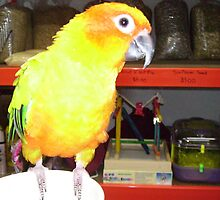 Bright Yellow Parrot in Pet Shop. by Mywildscapepics