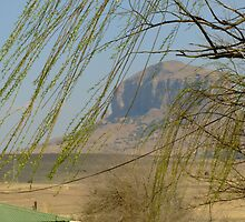 Wind in the willow. Swinburn, South Africa by Fineli