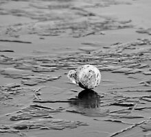 Ball on Ice in South TX by GJKImages