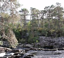 Scots Pine Watch Over a Mountain Stream by Charlie B