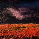 The Dark Field by Kelvin Hughes