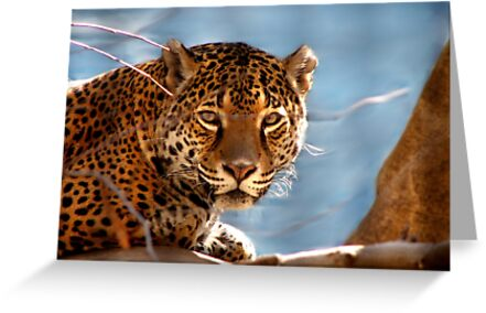 Jaguar His Golden Eyes  by NatureGreeting Cards ©ccwri