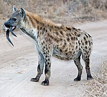 Hyena With Serious Overbite by Michael  Moss