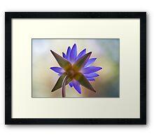 Shining Thru Two - purple waterlilly  Framed Print