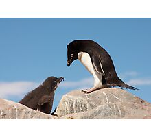 "Adelie Penguin and Chick ~ ""Well......if you say so dad"" Photographic Print"