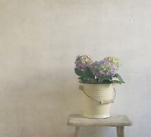 hydrangea resting on stool by paulgrand