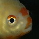 Mr. Fish by Auntymazza