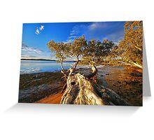 Trees at Mallabula  Greeting Card