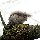 MoHawk Squirrel by RWaters