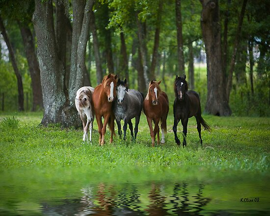 Playful Ponies by Kathy Cline