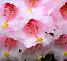 The Heart of a Rhododendron by Carol Clifford