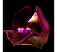 Grace - A New Perspective on Orchid Life Photographic Print