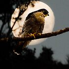 Falcon Moon by wildshot