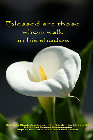 Blessed are those whom walk in his shadow; Lei Hedger Photography, La Mirada, CA USA (1646 views 8/28/13) by leih2008