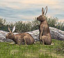 Noggin's Rabbit by Walter Colvin