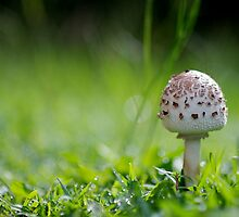 Morning Mushroom by Natsky