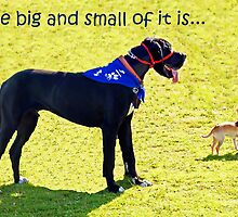 The big and the small of it is... by Julia Harwood