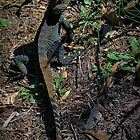 Gippsland Water Dragon. by salsbells69