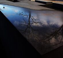 Reflections On the Dead by Lorraine Bratis