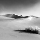 Stovepipe Wells Dunes-B&amp;W by Zane Paxton