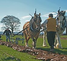 Ploughing match by Fiona MacNab