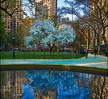 Spring Arrives In Madison Square Park by Chris Lord
