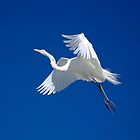Elegant in Flight by Linda Godfrey