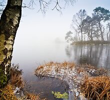 Frozen in Time - Tarn Howes, Cumbria by David Lewins