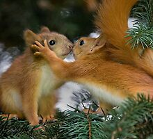 Baby Squirrel Kiss by Sergey Bezberdy