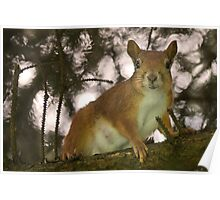 Red Squirrel Mom Poster
