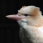 Kookaburra In The Woods by SolitaryMomentX