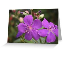 Tibouchina Jules Greeting Card