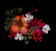 Flowers from my garden by Lauren Marr