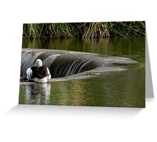 Pelican on Edwardes Lake Park Greeting Card