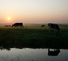 Cow sunrise in the country by Sergey Bezberdy