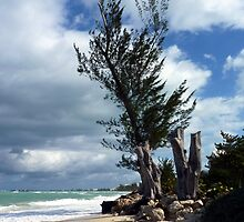 Seven Mile Beach, Grand Cayman, Caribbean  by Geetha Alagirisamy