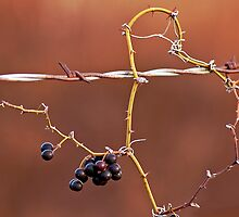 Barbed Berries by Nick Conde-Dudding