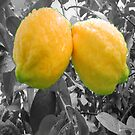 A Beautiful Pair of LEMONS by DAdeSimone