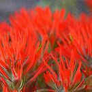 Indian Paintbrush - Sponge filter by Kim Barton