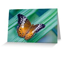 Cruiser Two - Kuranda butterfly sanctuary Greeting Card