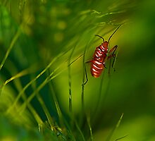 Red Bug & the  Barley Leaves by Mukesh Srivastava
