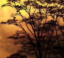 Serengeti Sunset by capturedjourney