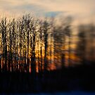 Sunset Trees by Trenton Purdy