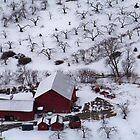Winter Orchard by Dandelion Dilluvio