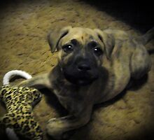 Bugsy at 7 weeks by Tracy DeVore