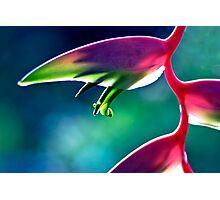 Sexy Pink - heliconia flower Photographic Print