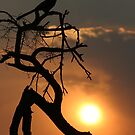 Grey Go-away-bird sunset silhouette by John Banks