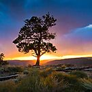 Ponderosa Sunset at Red Canyon by Kim Barton